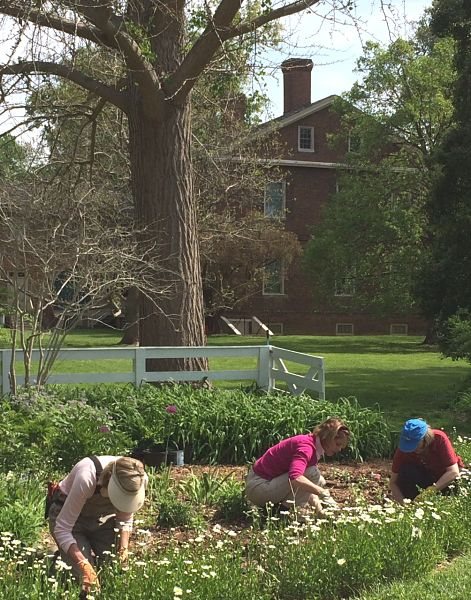 Volunteers Planting Annuals
